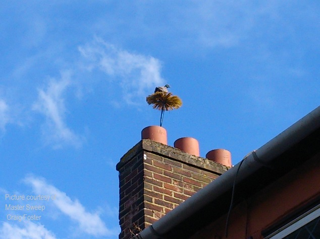Pigeon atop chimney sweeps brush above chimney pot