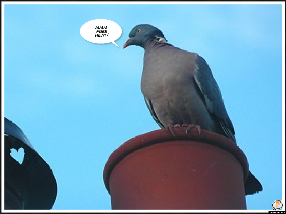 "Pigeon on chimney pot ""mmm free heat"""